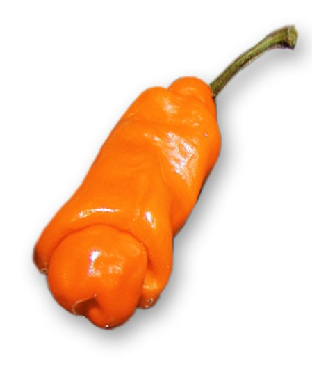 Peter Pepper Penis Orange Chili Samen
