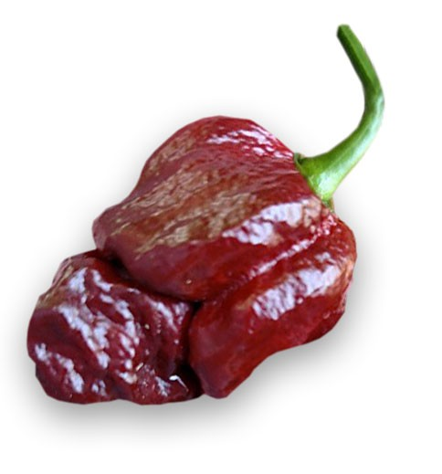 Brazilian Ghost Pepper Chili Samen