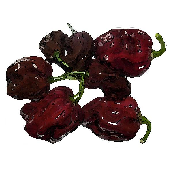 Habanero Brown Chili Samen