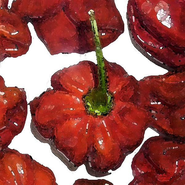 Habanero Capucchino Chili Samen