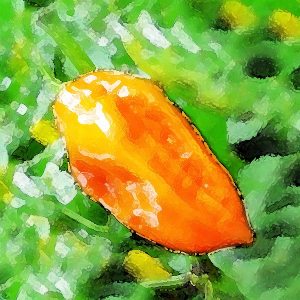Orange Bhut Jolokia Chili Samen