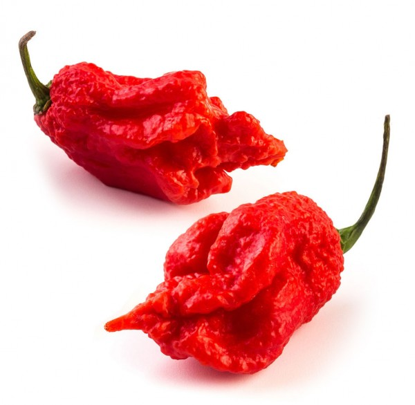 "Carolina Reaper ""HP22B Selected"" Chili Samen, 200 Stück"