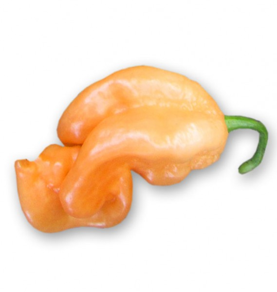 Trinidad Scorpion Peach Chili Samen
