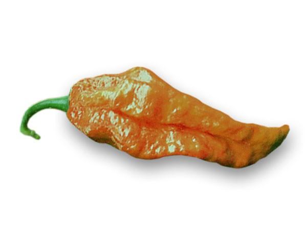 Bhut Jolokia Caramel Chili Samen