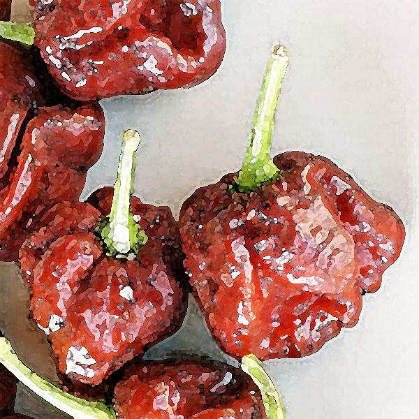 Trinidad Scorpion Moruga Chocolate Samen
