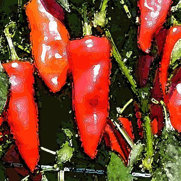 Piment de Espelette Chili Samen