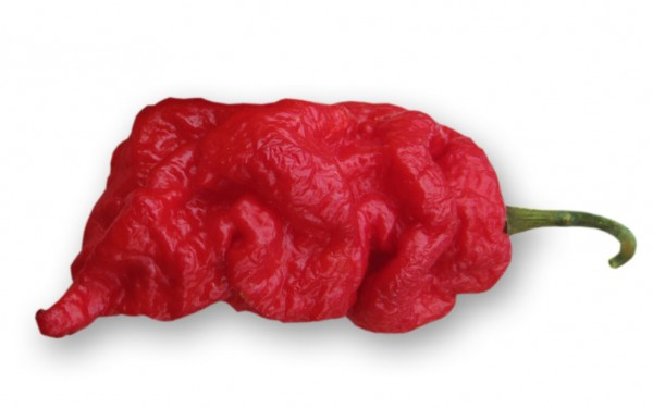 Jays Red Ghost Scorpion Chili Samen